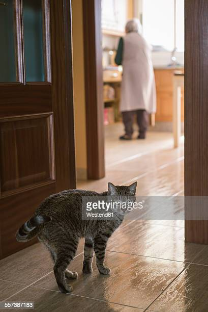 Tabby cat at home