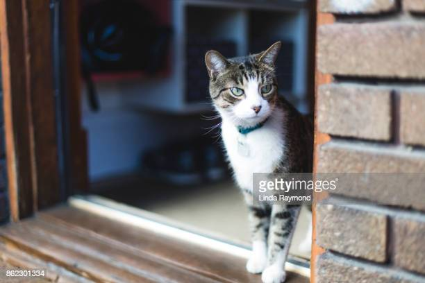 Tabby cat at the front door