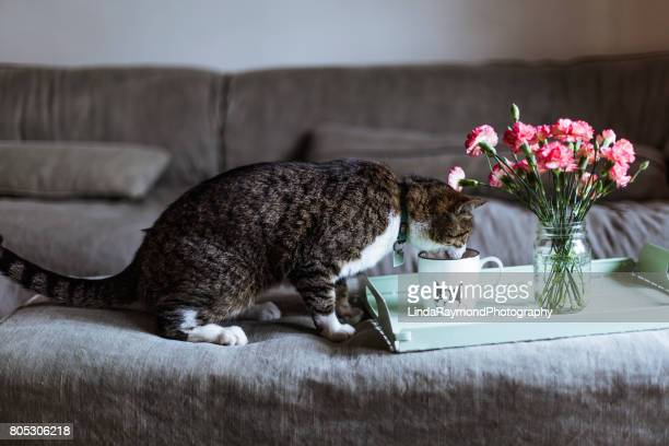 A tabby cat drinking in a cup of tea with a flower bouquet on a tray