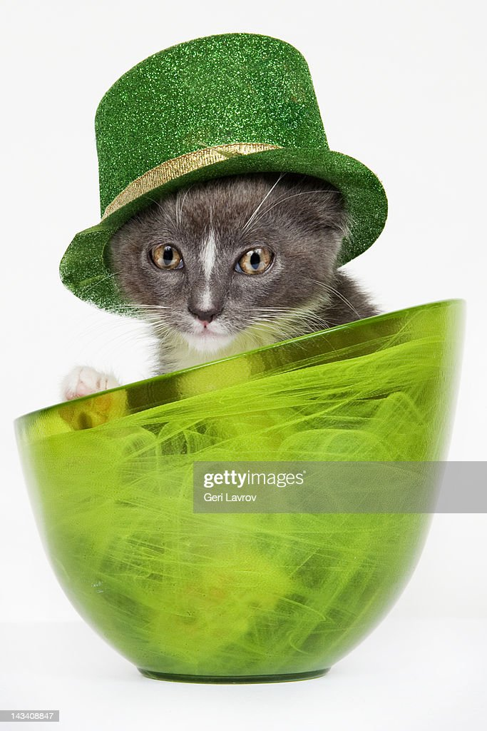 Tabby cat in a bowl wearing a green hat : Stock Photo