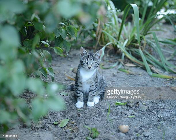 Cat In Backyard kitten backyard stock photos and pictures | getty images