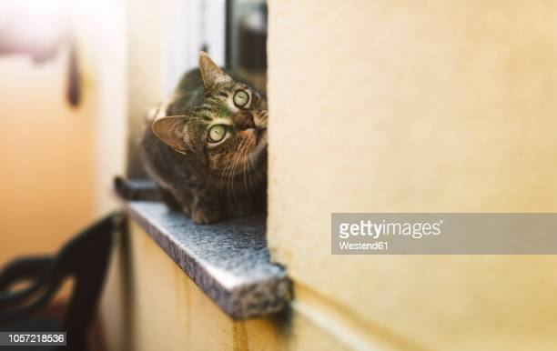 Tabby cat looking up, sitting on window sill