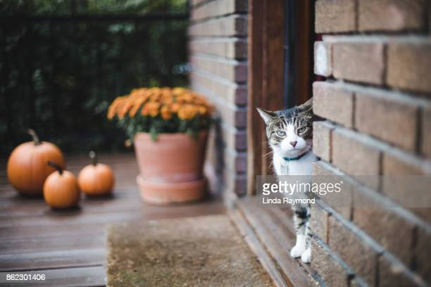 tabby cat on a porch - halloween cats stock pictures, royalty-free photos & images