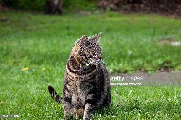 tabby cat on garden lawn with spider web covered over head