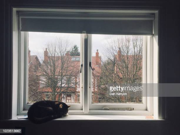Tabby cat on windowsill