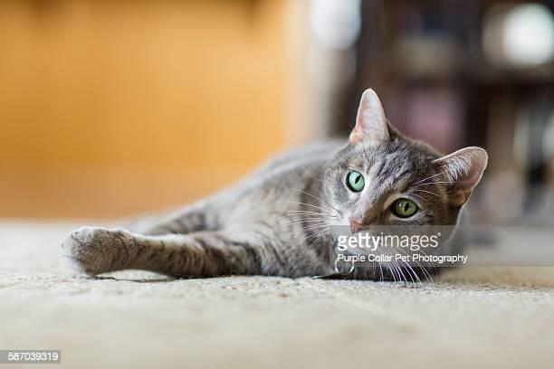 Tabby cat relaxing indoors