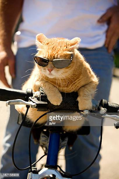Tabby Cat Riding a Bicycle with Sunglasses