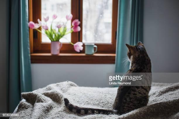 Cyperse kat, zittend op een bed