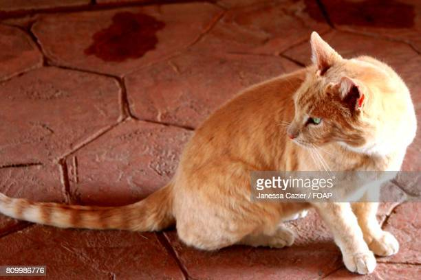 tabby cat sitting on cobblestone street - janessa stock pictures, royalty-free photos & images