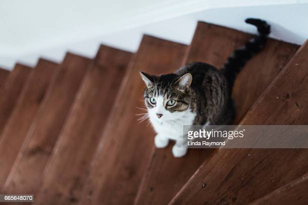 A tabby cat sitting on stairs and looking up