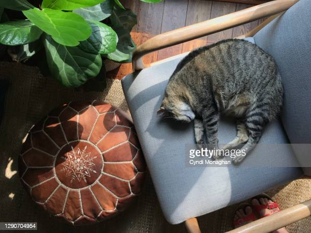 tabby cat sleeping on a chair with a leather pouf and houseplant - naughty america stock pictures, royalty-free photos & images