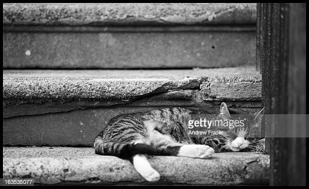 Tabby Cat sleeping on stone steps of main door tenement on St Vincent Crescent, Glasgow, Scotland, 2010