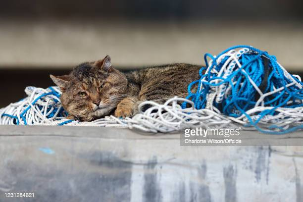 Tabby cat sleeps on spare goal netting in the stadium during the Sky Bet Championship match between Queens Park Rangers and AFC Bournemouth at The...