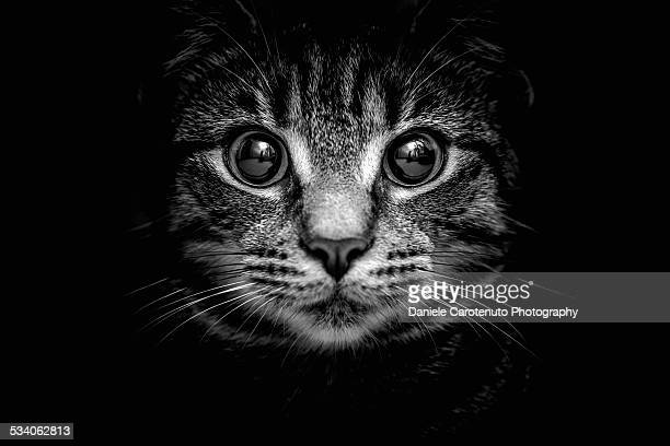 Tabby in the dark
