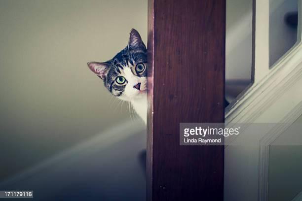 Tabby kitten on stairs