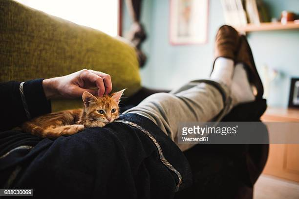 tabby kitten relaxing on the lap of owner - aaien stockfoto's en -beelden