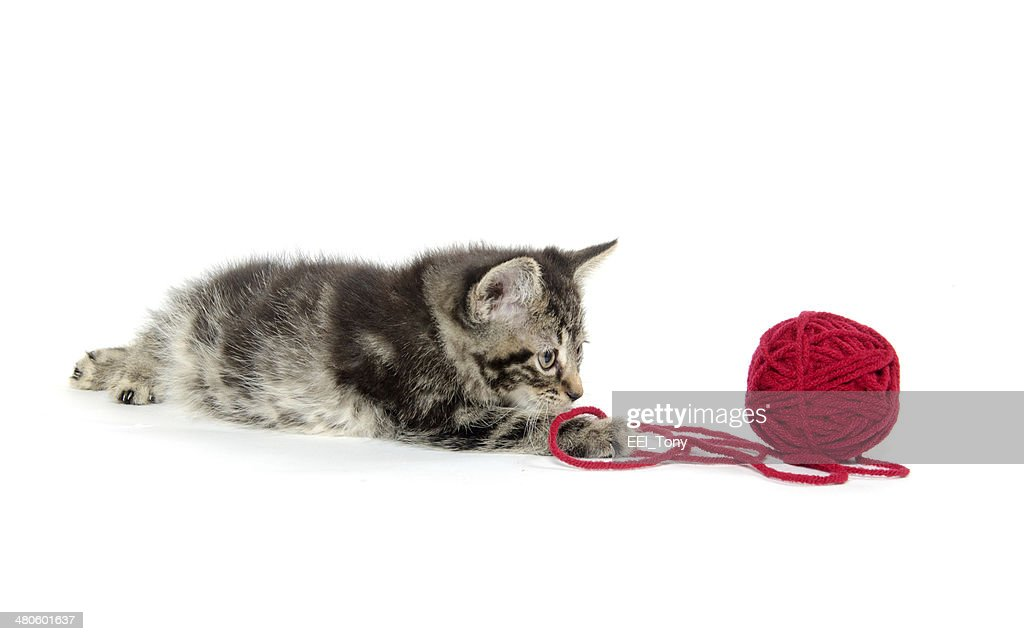 Tabby kitten with yarn : Stock Photo