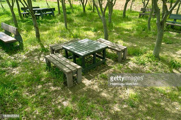 Table and benches in the woods