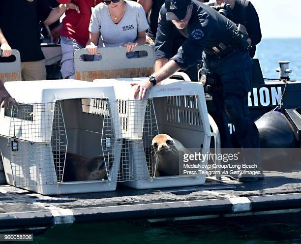 T Tactical Waterborne Unit LA Port Police join forces with the Marine Mammal Care Center to escort and release rehabilitated sea lions back to the...