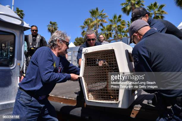 T Tactical Waterborne Unit LA Port Police joined forces with the Marine Mammal Care Center to escort and release rehabilitated sea lions back to the...