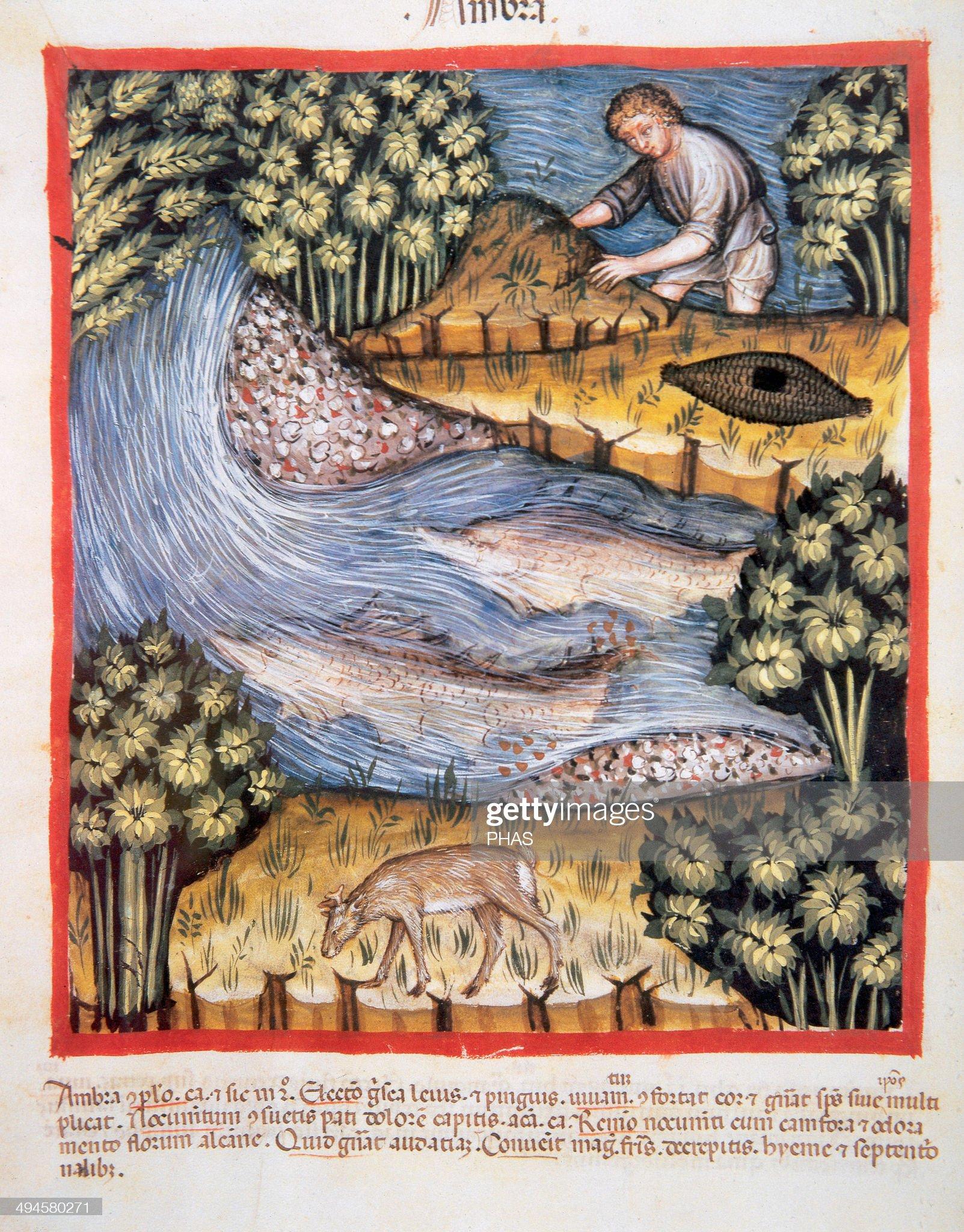 Tacuinum Sanitatis. Man looking for amber by a river : Foto di attualità