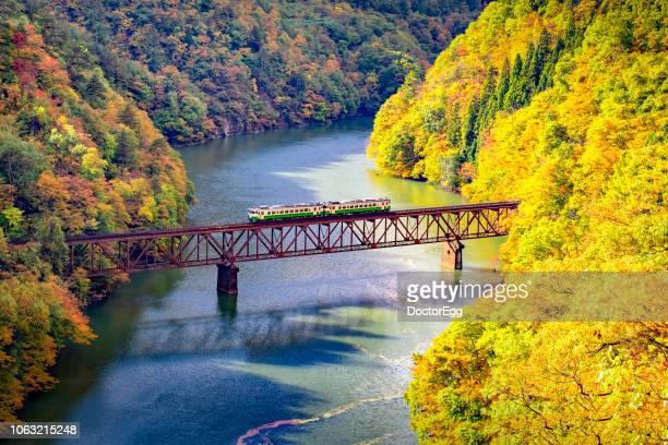 tadami line train on the bridge across river in autumn, mishima,fukushima,japan - land feature stock pictures, royalty-free photos & images