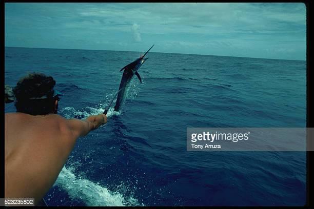 Tagging a Blue Marlin