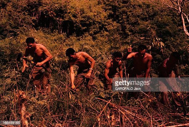 Tahiti In July Tahiti juillet 1959 Sur l'île au milieu d'une végétation dense un goupe d'hommes torses nus munis d'une hache et de machettes coupant...