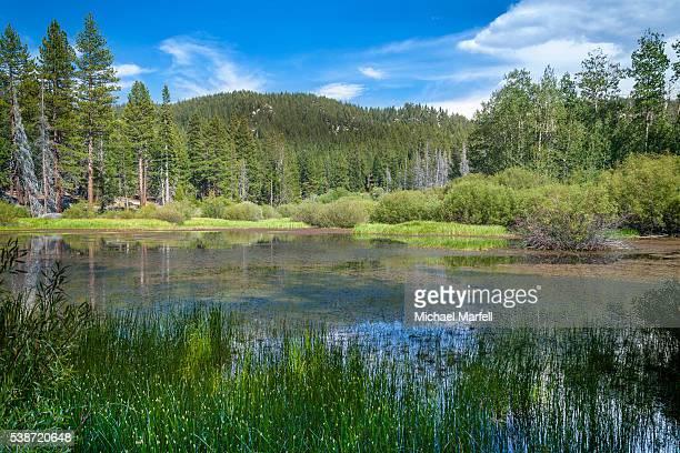 Tahoe Meadow