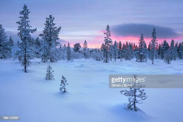 Taiga Forest, Arctic Finland