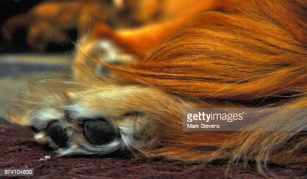 tail and paw - monkey paw stock photos and pictures