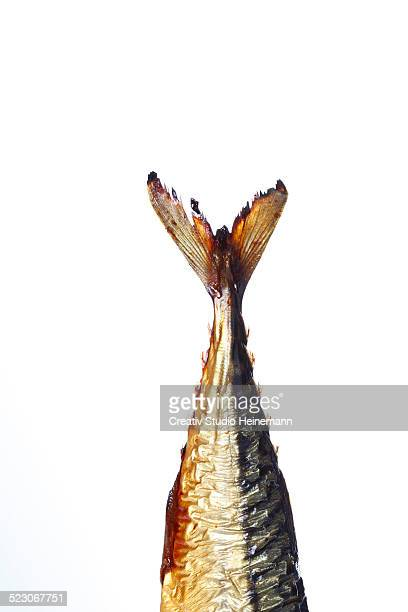 Tail of a smoked Mackerel -Scomber scombrus-