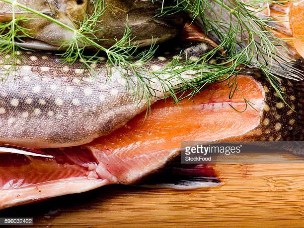 tail of brook charr with dill - speckled trout stock photos and pictures