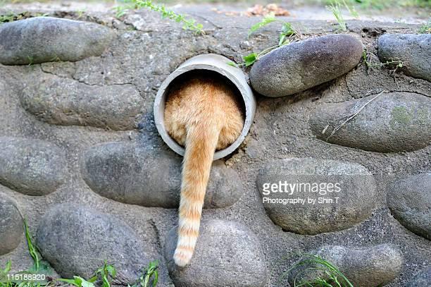tail - felino salvaje fotografías e imágenes de stock