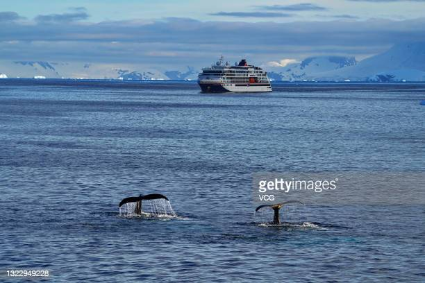 Tails of two whales are seen on December 18, 2019 in Antarctica.