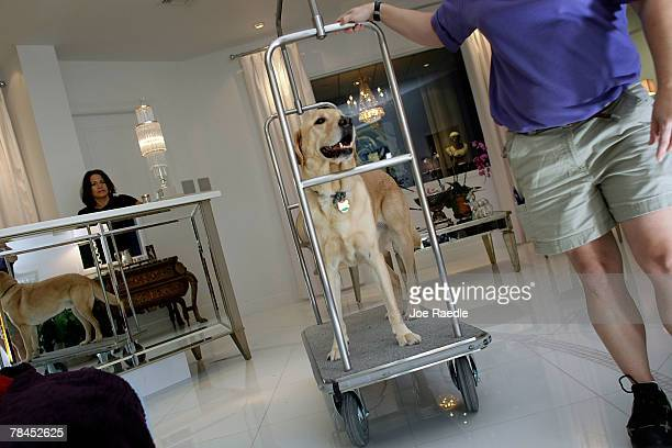 Taiter is wheeled around in a luggage cart at the Chateau Poochie the luxury hotel for dogs and cats December 13 2007 in Pompano Beach Florida The...