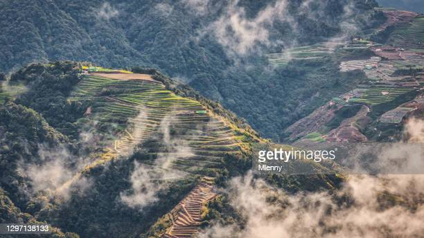 taiwan tea plantation highland mountain terraced field taroko gorge - mlenny stock pictures, royalty-free photos & images
