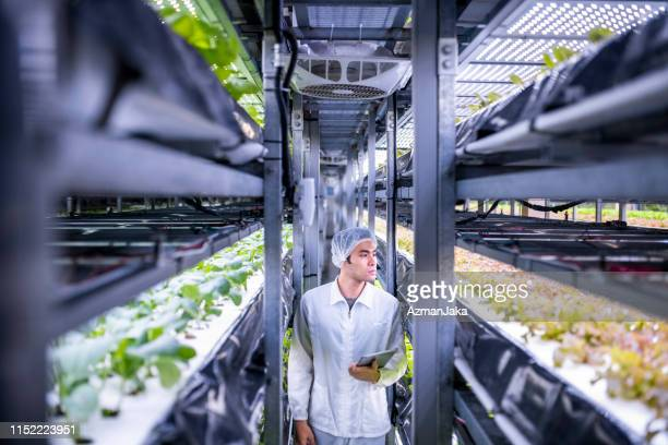 taiwanese indoor ag-technician nurturing year-round crops - cultivated stock pictures, royalty-free photos & images