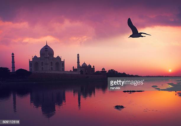 taj mahal and the yamuna river - taj mahal stock photos and pictures