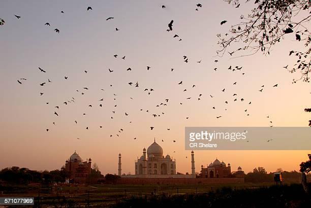 Taj Mahal and Yamuna river at sunset, Agra, India.