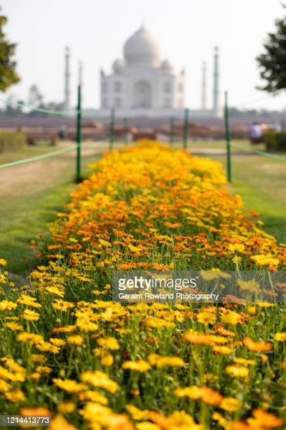taj mahal, asia - celebrity death stock pictures, royalty-free photos & images