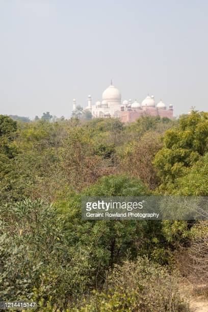 taj mahal on top of the trees - celebrity death stock pictures, royalty-free photos & images
