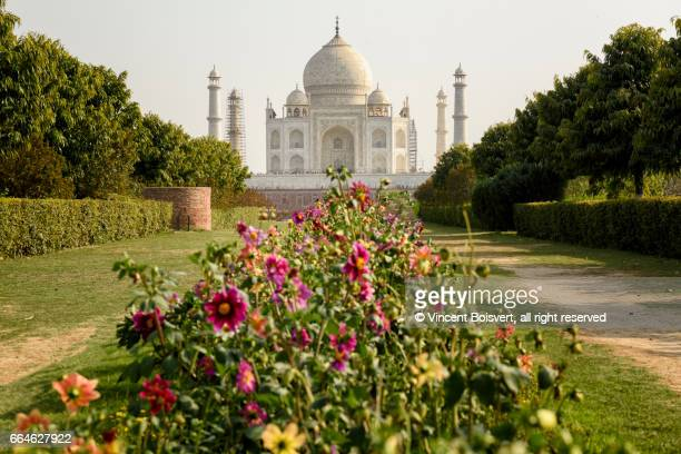 Taj Mahal seen from Mehtab Bagh, Agra, India