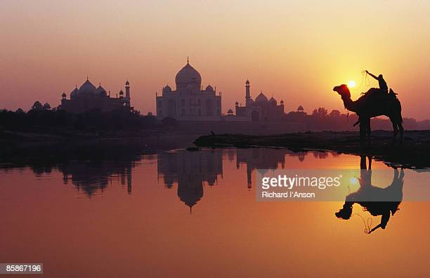 Taj Mahal & silhouetted camel & reflection in Yamuna River at sunset.