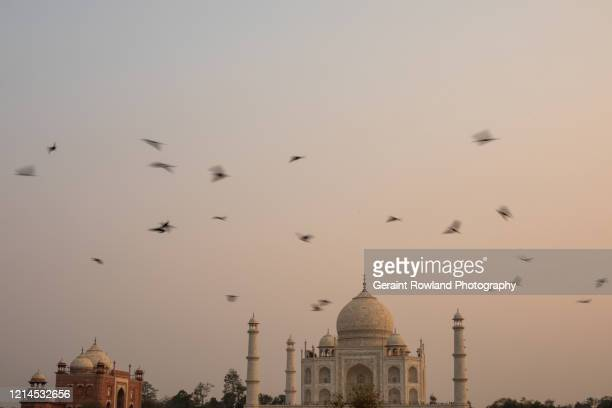 taj mahal travels - celebrity death stock pictures, royalty-free photos & images