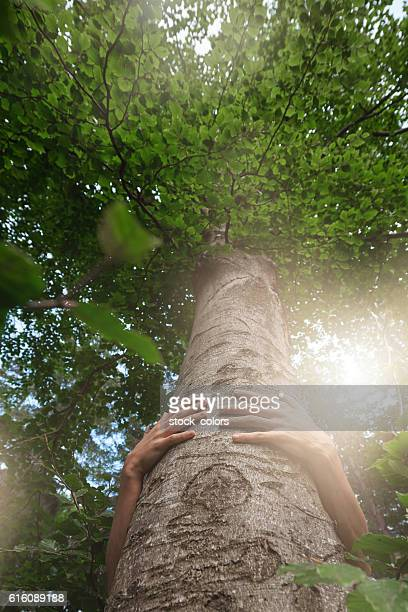 take care of the environment - tree hugging stock pictures, royalty-free photos & images