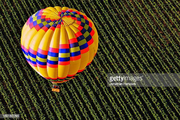 Taken from a hot air balloon over vineyards in Sonoma County, California.