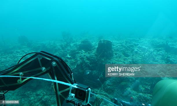 Taken from inside a submersible twoperson vehicle a view of the seafloor off the coast of Fort Lauderdale Florida where a port dredging project may...