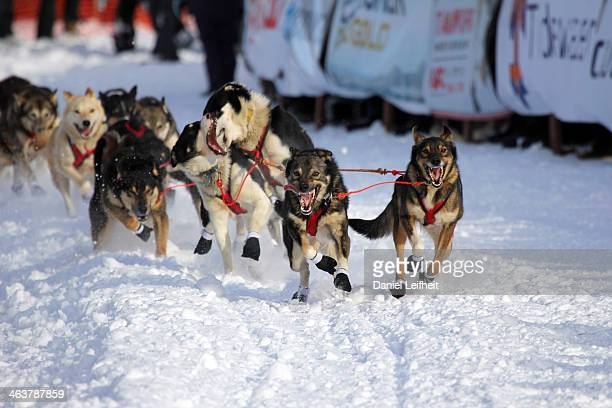 CONTENT] Taken in Willow Alaska during the 2013 Iditarod