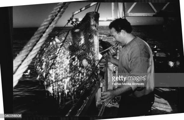 Taken on board the Arakiwa off Sydney.Exporting fresh fish to Hong Kong.Fishing about Nautical Miles from Sydney.Joe Bagnato skipper/owner of the...